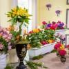 Evde Bitki Bakımı İçin Bilinmesi Gerekenler