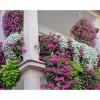 Pencere Önü Çiçek Dekorasyonları