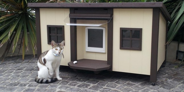 Kedi ve Köpekler İçin İlginç Yuva Tasarımları